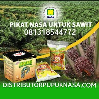 http://www.distributorpupuknasa.com/2018/05/pupuk-terbaik-untuk-kelapa-sawit.html
