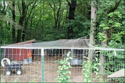 Hawk Stopper Visual Deflection Netting over Chicken Run