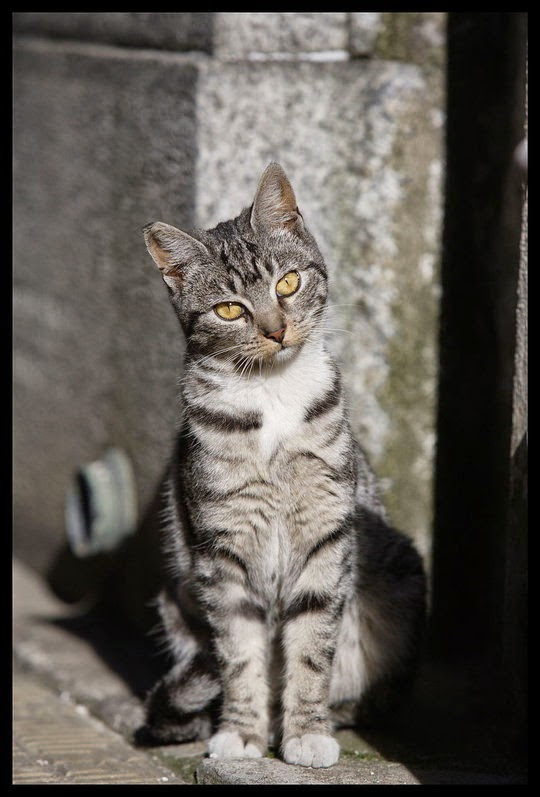 recoleta cats