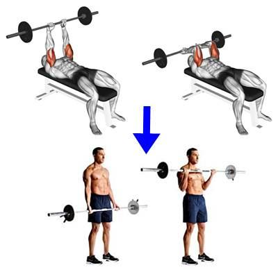 Biserie para trabajar los biceps y triceps braquiales