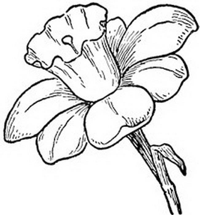 best Flores En Blanco Y Negro Para Pintar image collection