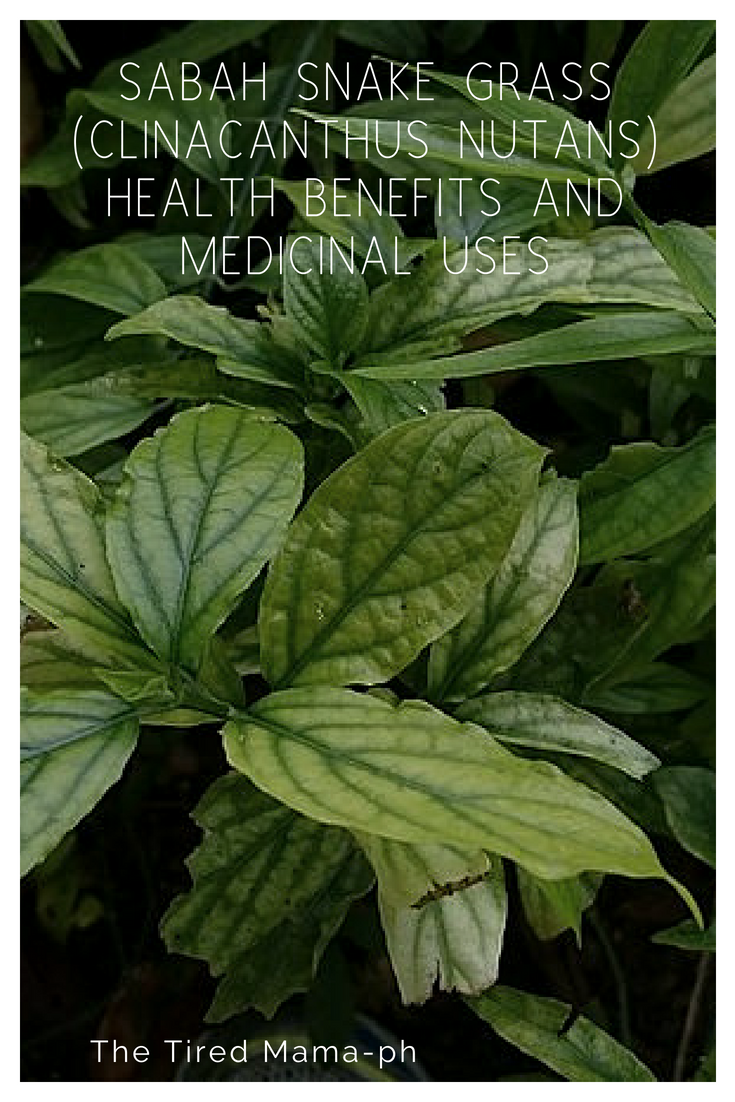 Goosegrass/Paragis- 10 Potential Health Benefits, Use and