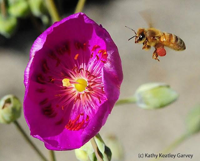 abeja volando