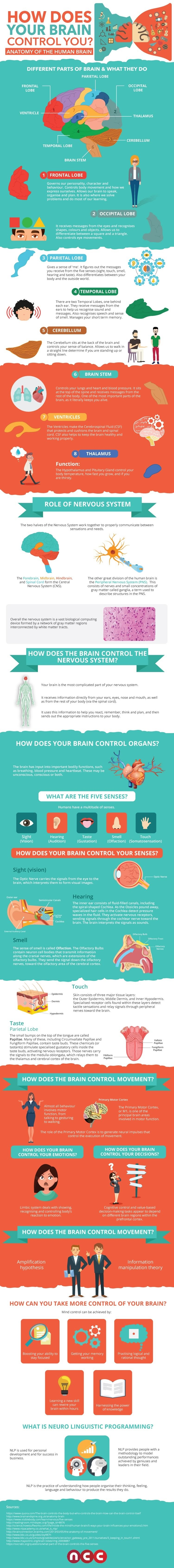 How Does Your Brain Control You? - #Infographic