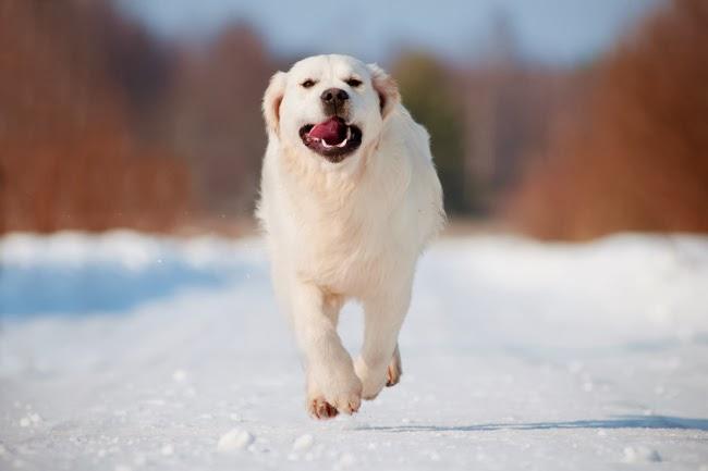 Siłownia dla psów z nadwagą
