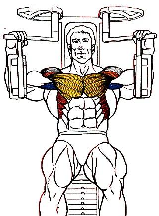 Dibujo de un hombre haciendo ejercicios para sus pectorales