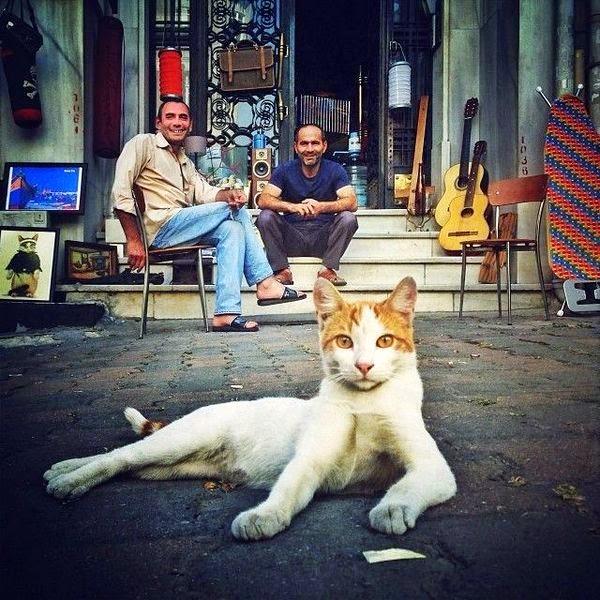 cat pictures istanbul