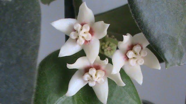 di tutto un blog giardinaggio e fiori un forum