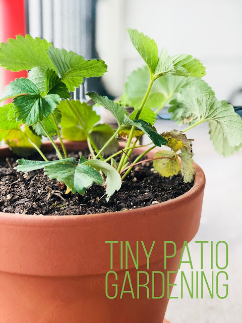 Tiny Patio Gardening