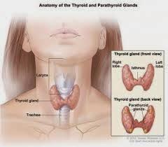 Obat Tradisional Kista Tiroid