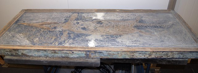Ichthyosaur dinosaur framed with the blue paint now removed, leaving behind a grey stone matrix and lots of old infill.