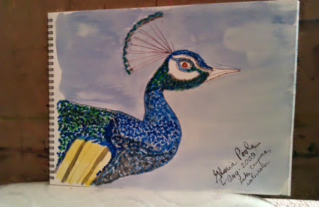 Peacock-mixed-media-sketch-by-gloriapoole-of-Missouri-yr2009