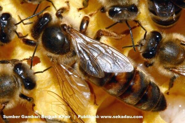 Belajar dari Kehidupan Lebah