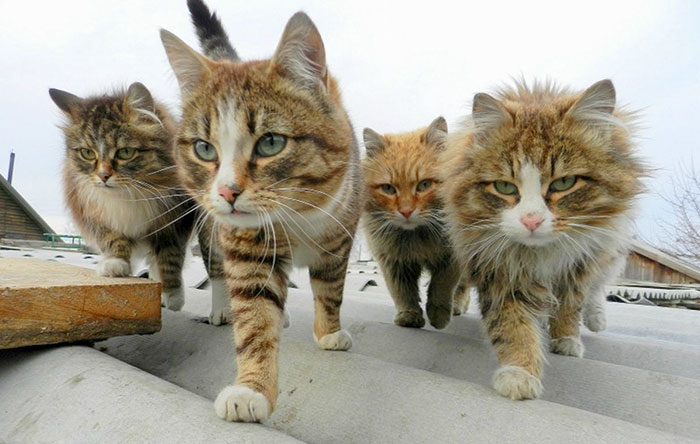 32 Animals That Look Like They're About To Drop The Hottest Albums Of The Year - The Newest Grunge Band In The Scene