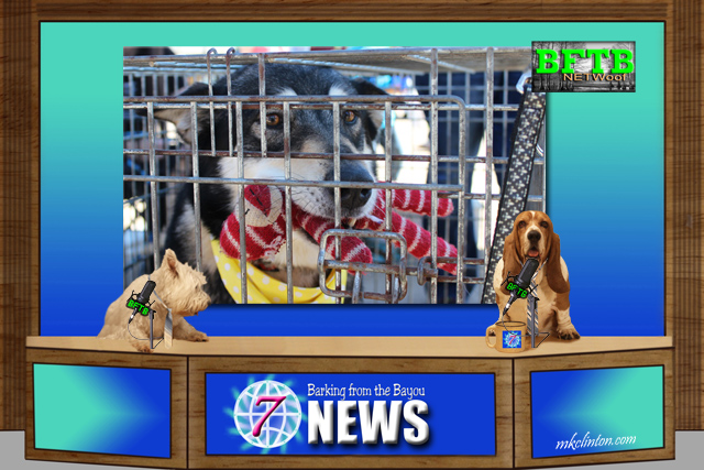 BFTB NETWoof News with two dog anchors