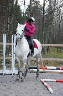 working equitation, riitta reissaa, katarina cozmei