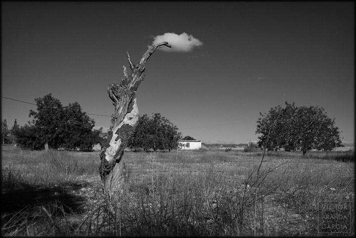 fotografia,paisaje,limites,murcia,fuente-alamo,nube,arbol