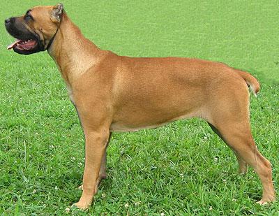 la prostatite nei cani provoca un aumento dellalp