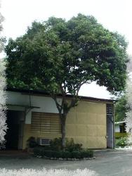 Árbol de sarrapio