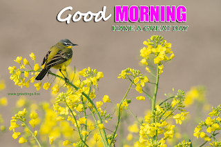 good morning images bird flowers