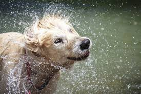 YUCK! Wet puppy smells need strategies for making the classroom SMELL sweeter.