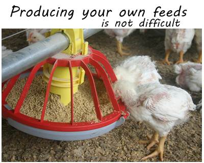 How To Prepare Your Own Chicken Feeds The Best Formula