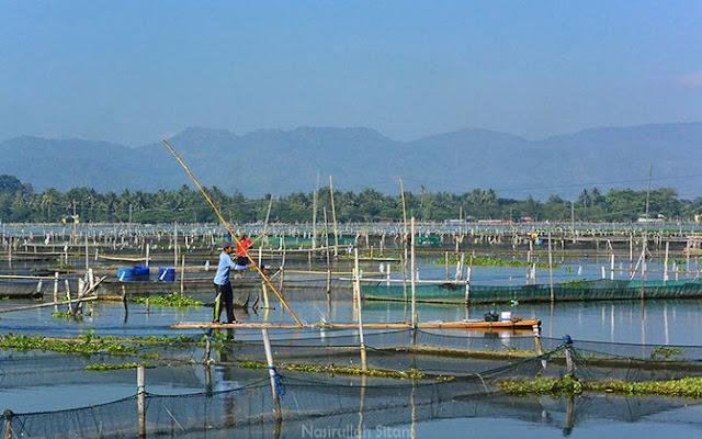 Kesibukan kala pagi di Waduk Rowo Jombor, Klaten