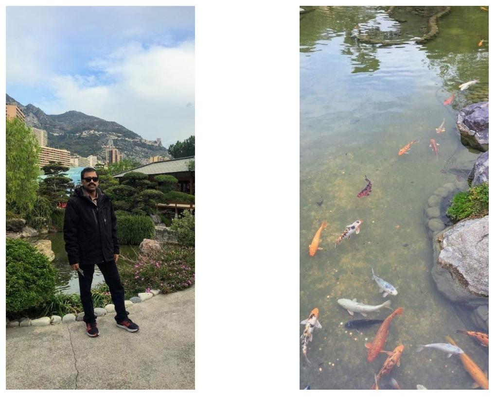 Golden fish in the ponds of Japanese garden, Monaco
