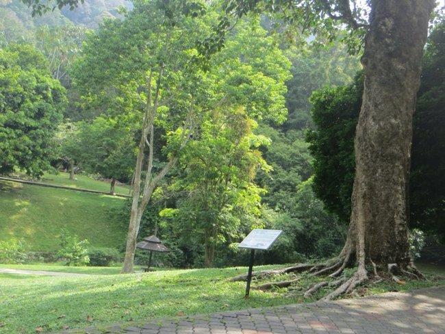 Дерево и табличка о нем