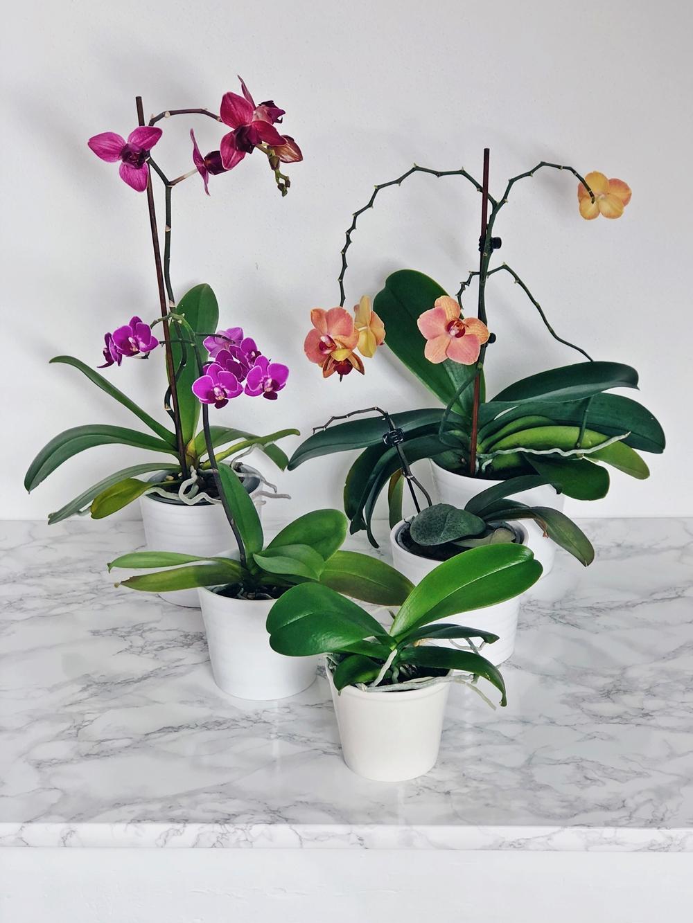 Tipps & Tricks für wunderschöne und gesunde Orchideen