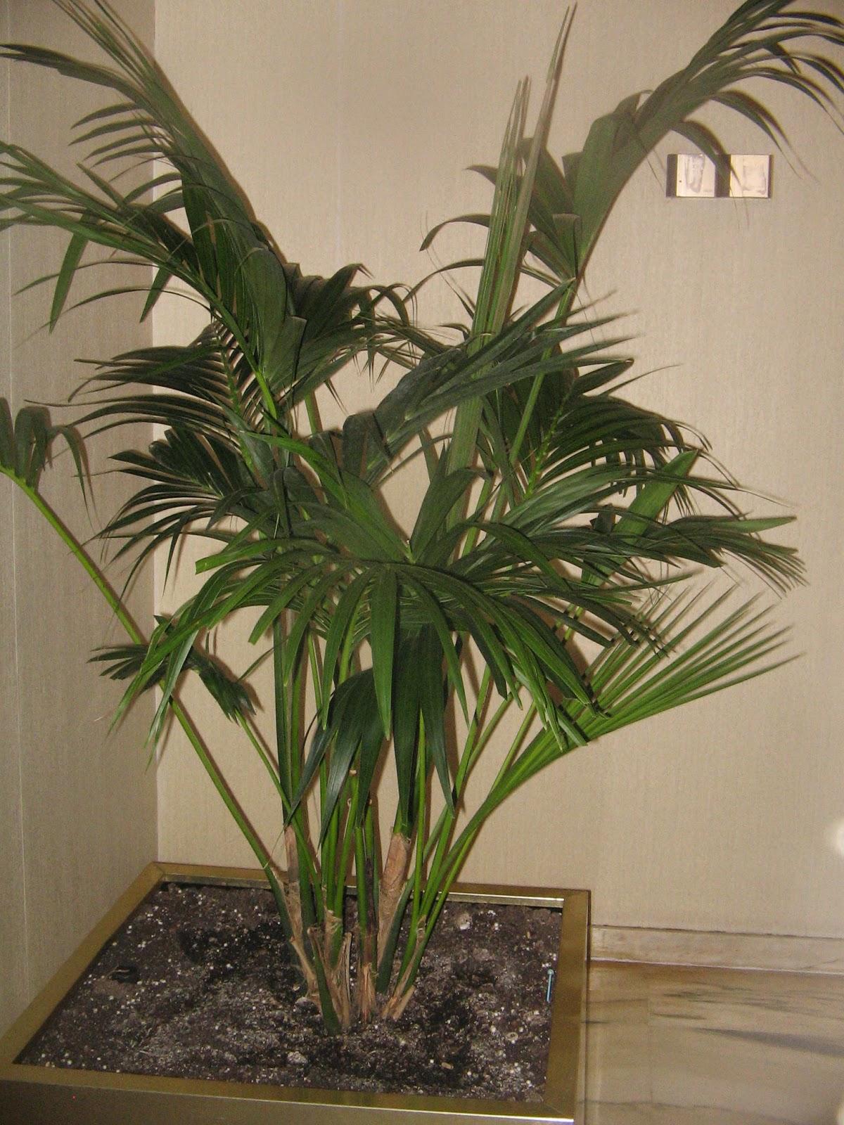Plantas de interior con poca luz - Plantas de interior que no necesitan luz ...