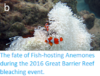 http://sciencythoughts.blogspot.co.uk/2017/12/the-fate-of-fish-hosting-anemones.html