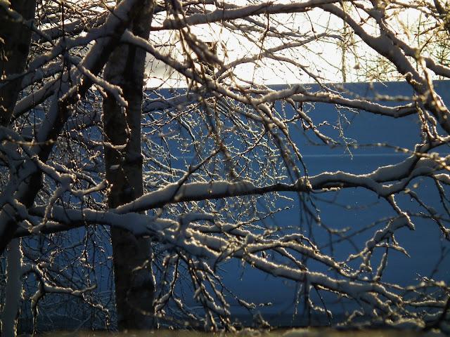 valo, lumi, oksat, aurinko, winter, vastavalo
