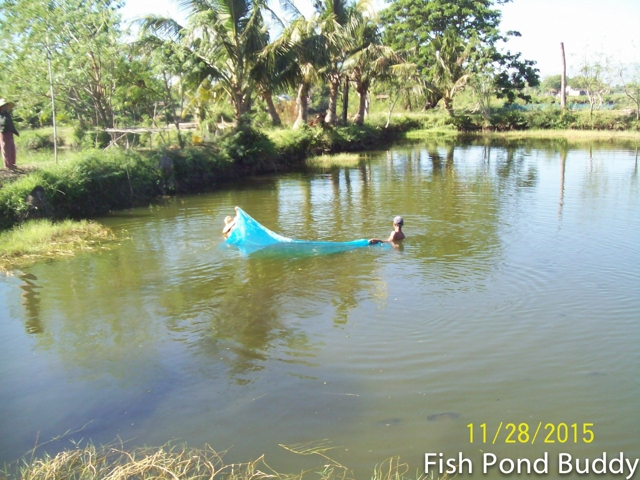Fish pond buddy how to catch and clean a school of for How to catch fish in a lake
