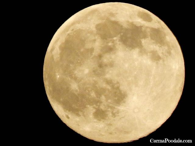 Full moon in Kentucky-carmapoodale.com