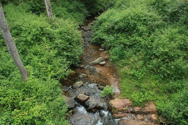 A forested stream between K.Gudi and BR temple inside BRT tiger reserve, Karnataka
