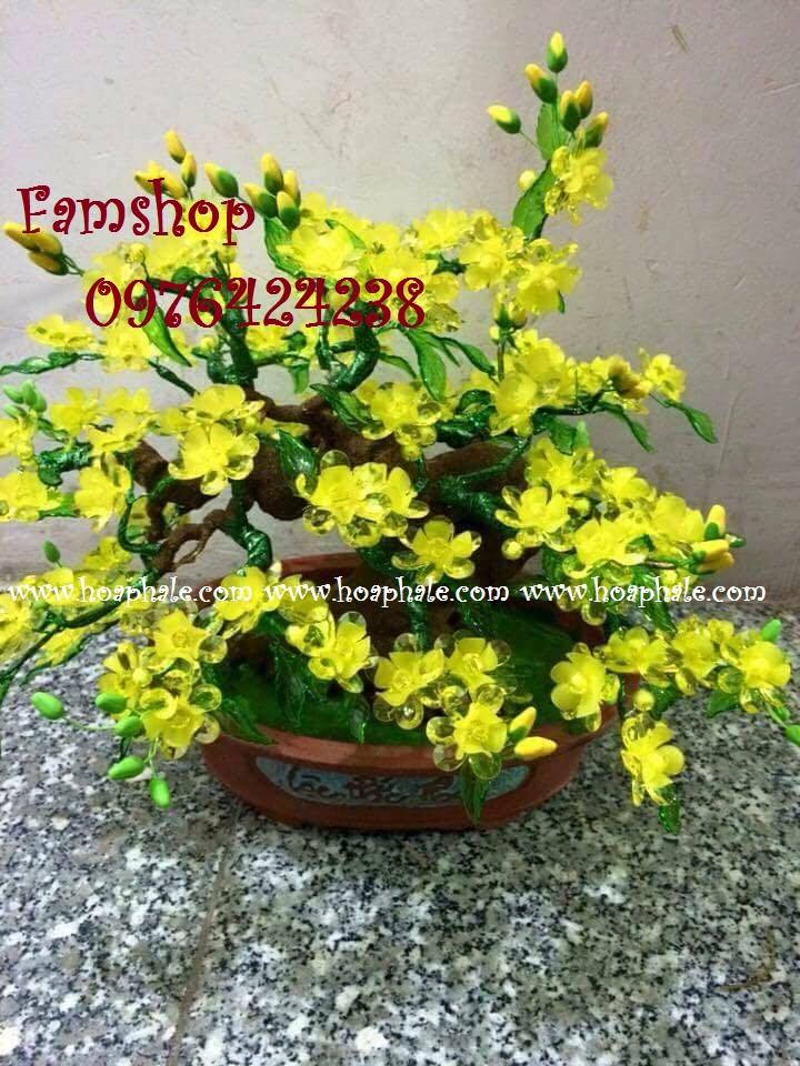 Goc bonsai cay hoa mai tai Duc Giang