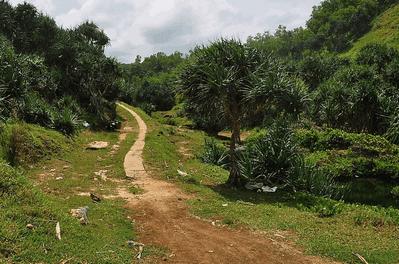 Akses Jalan Setapak Menuju Banyu Tibo
