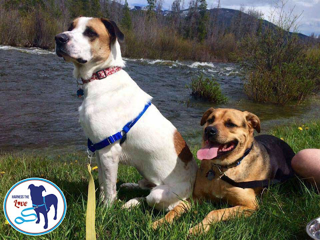 Two beautiful dogs resting by a river whilst on a hike in nature