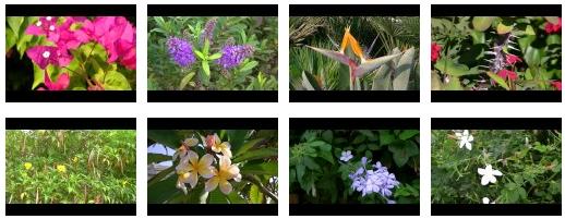 Ésta es la cuarta parte de Vídeos de flores y plantas con flores IV