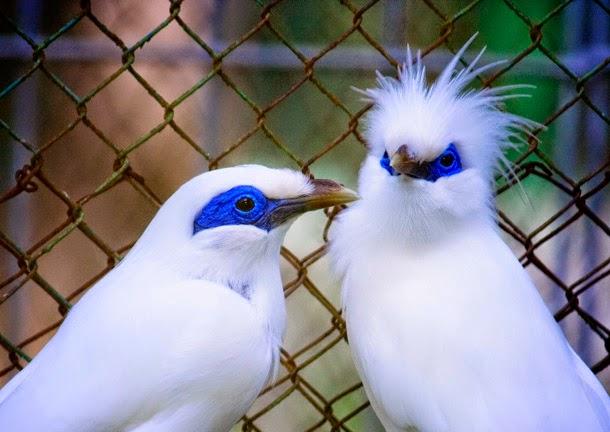 burung yang di lindungi di indonesia karena terancam punah