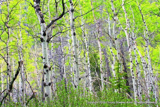 Another view of the aspen trees, more space between them, and green foliage brightens the sight.