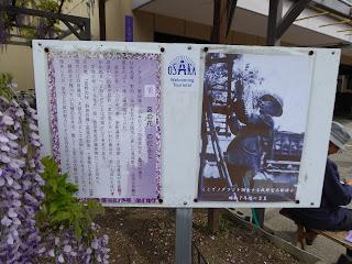 ノダフジを調査する牧野富太郎博士(昭和7年ごろの写真)