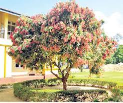 National-Tree