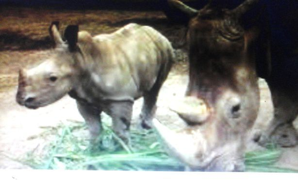 Rhino Package Bali Safari And Marine Park - Bali, Zoo park, Tourism Object, Program, Recreation