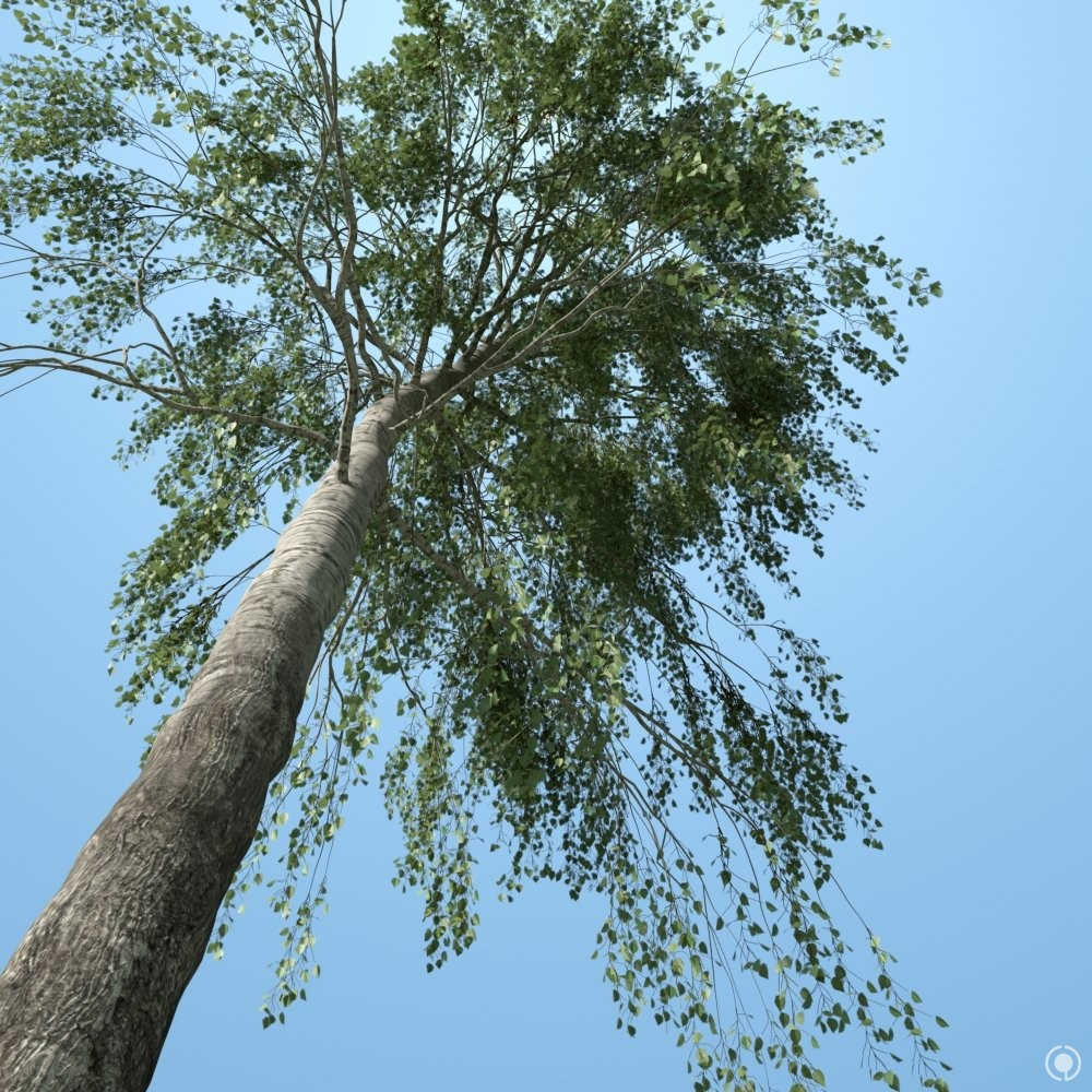 Evermotion trees free download