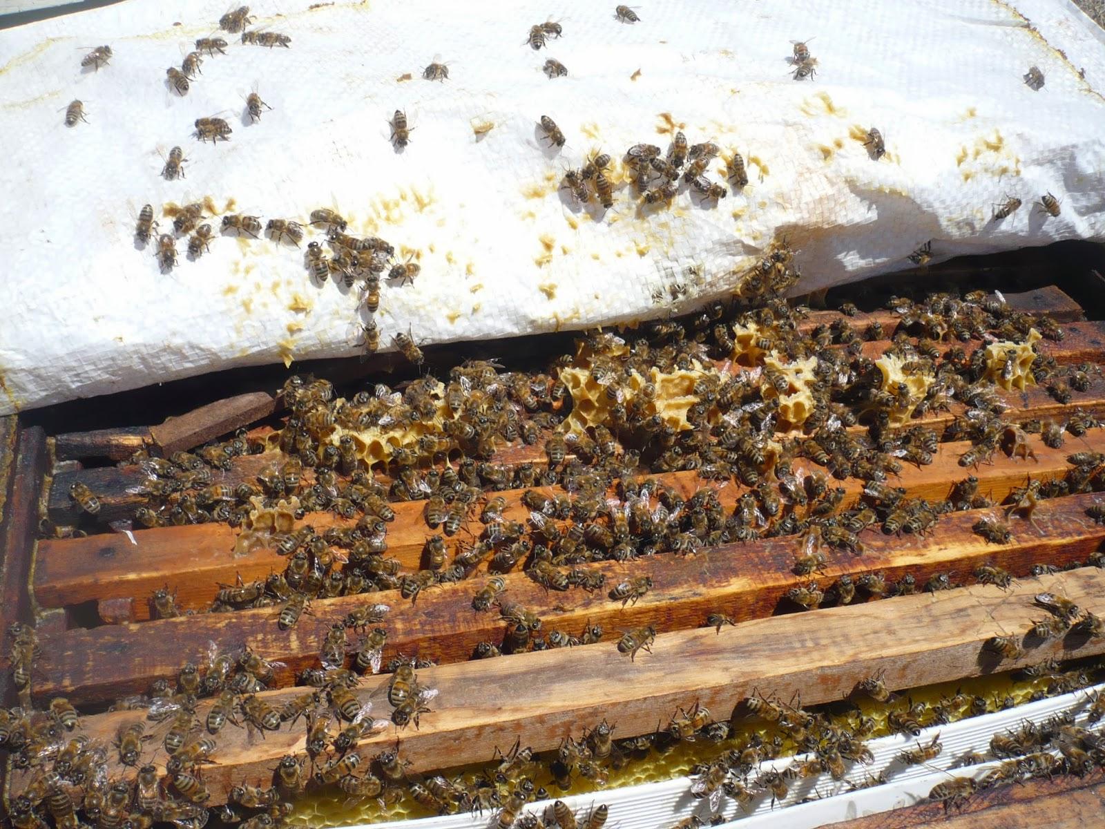 Arı Soktuğunda Ne Yapılmalıdır