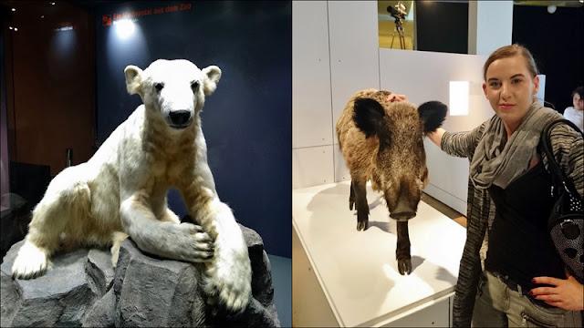 Berlin erleben - Naturkundemuseum Berlin - Knut