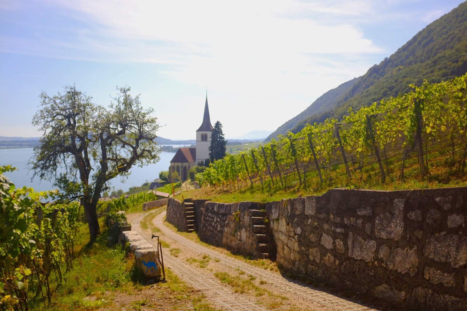 Le Chameau Bleu - Ligerz -  Week end en Suisse