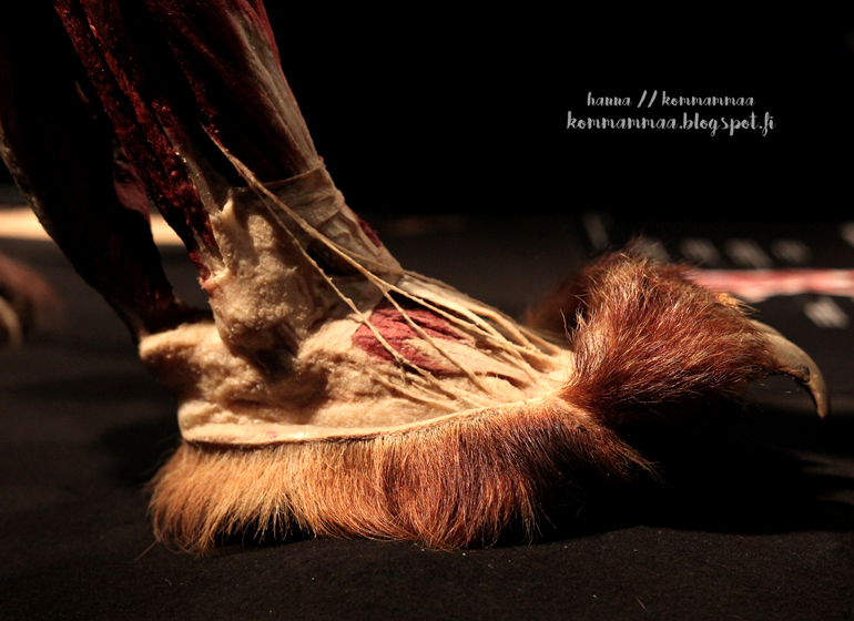 animal body worlds näyttely heureka suomi finland 2017 exhibition